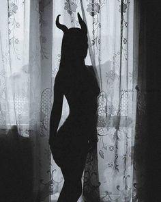 Puss in Boots 😺 Demon Aesthetic, Bad Girl Aesthetic, White Aesthetic, Foto Fantasy, Dark Fantasy Art, Dark Art, Girl Shadow, Shadow Pictures, Arte Obscura