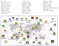 The Wonderful World of Essential Oils: doTERRA Oil Origins Map