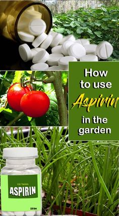 How to use Aspirin in the garden | Nature Bring - NatureBring