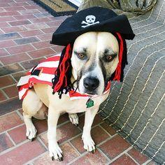"|| Happy Halloween friends! Or as the #PirateTranslator put it ""Grog-filled Halloween buckos!"" [A] #OUTINON"