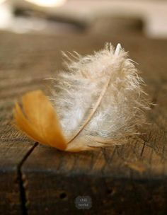 Image discovered by PiggyBlue. Find images and videos about brown and feather on We Heart It - the app to get lost in what you love. Hope Is The Thing With Feathers, I Believe In Angels, Foto Instagram, Jolie Photo, Arte Floral, Bird Feathers, At Least, Tumblr, Pictures