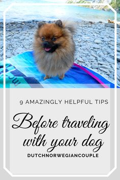 Traveling with your dog has become more and more popular over the years. Are you one of those who wants to take your furry little friend with you on vacation? We know that most people tend to only take their dogs with them when traveling inside their own country. With the situation in the world today, we know that traveling inside your own country will be the only option for a while. And maybe that will boost the number of traveling dogs. #travelingdogs #dogs #pomeranian #pomeranianpuppy… Snowy Mountains, Dog Travel, Pomeranian, Beach Day, Helpful Hints, Your Dog, Road Trip, Traveling, Number