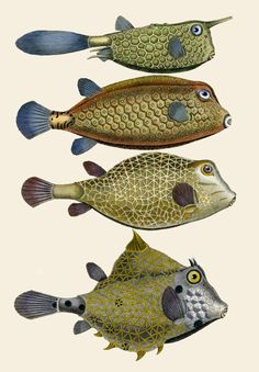 exercicedestyle:  Bonnaterre Fish Prints 1788....ancestors...members of the clan