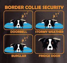Border Collie Security #bordercollie