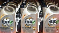Neuer Ärger für die Bayer-Tochter Monsanto: Nach Medienberichten wird der Glyphosat-Hersteller verdächtigt, in Deutschland heimlich Studien finanziert zu haben. Deren Ergebnisse lassen den Unkrautvernichter in gutem Licht erscheinen.
