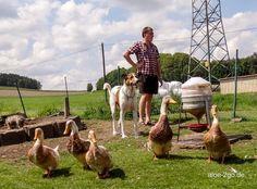 ... phänomenale Einblicke ins bunte Leben auf dem #glücklichen Geflügelhof von Andreas Pongratz klick hier: www.schnatterhuhn.de/