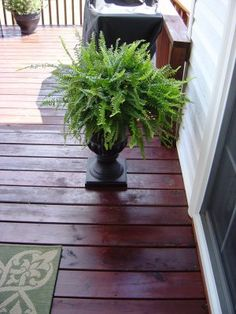 potted fern for either side of the bench