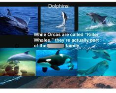 Ocean Animals-a Virtual Field Trip - Activate your students' background knowledge about ocean animals and introduce them to marine biology before you explore tons of photographs of marine life. This virtual field trip is a wonderful introduction to an oceanic unit or a lesson on habitats. Students will get the chance to move their name to signify what they've already experienced concerning the ocean (have they been to the beach? the aquarium?).  Resource type: SMART Notebook lesson