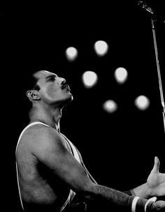 Freddie Mercury❤️