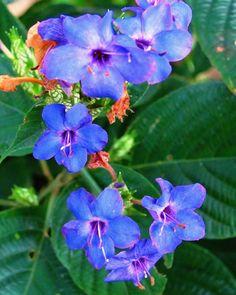 . . . . . #flowersturk #rsa_nature #kings_flora #flowerporn #tgif_nature #flowerstalking #awesome_photographers #nature_sultans #flowerstarz #macro_perfection #floralfix #ptk_flowers #nature_brilliance #EarthVisuals #artofvisuals #welivetoexplore #naturea