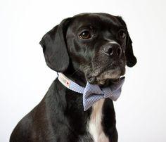 Blue Seersucker Bowtie Dog Collar via Etsy