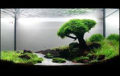 Sarab \ Paisajismo acuático: Bonsai acuático.