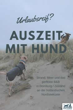 Enjoy or time out with dog on the Dutch North Sea coast - Buddy schreibt - Urlaub Dog Travel, Train Travel, Yorkie, Kitten Formula, Getting A Kitten, Cute Funny Dogs, Dog Games, Baby Kittens, North Sea