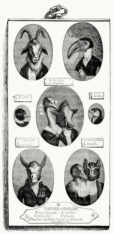 Topaze, portrait painter.  via tumblr     J-J. Grandville, from Vie privée et publique des animaux (Public and Private Life of Animals), under the direction of P. J. Stahl, Paris, 1867.