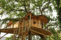 cabane dans un arbre