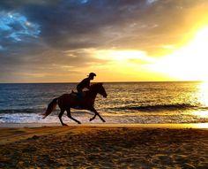 """#Madinina vue par @le_nono: """"An lè plaj la  #martinique  #lecarbet  #matinik_pictures  #westindies_pictures  #ig_martinique  #ig_caribbean  #carribean  #westindies  #sunset  #beach  #horse  #sky  #sea  #clouds"""" #WeLike ! A voir sur Instagram : http://ift.tt/1V4g29H"""