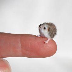 OOAK Miniature Lulu Hedgehog - Dollhouse Handmade Miniature 1:12 by Katie Doka #KatieDokaMiniatures