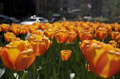 World's Greatest Flower Festivals