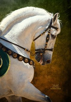 Dressage Riding - White horse - photo by Cheri Prill Most Beautiful Horses, All The Pretty Horses, Lippizaner, Andalusian Horse, Friesian Horse, Arabian Horses, Majestic Horse, Horse Photos, White Horses
