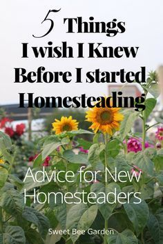 Interested in a homesteading lifestyle? Here are 5 things I wish I knew before getting started and the top lessons I've learned.