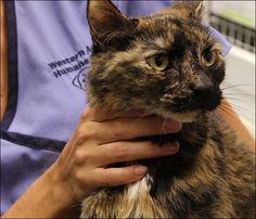 Stowaway Cat Rescued After Surviving on a Sunken Ship