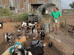 Paul Range feeds his brood of livestock. Each can serve as a food source if things get bad.