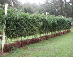 Excellent resource on straw bale gardening.