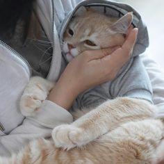 Mothering a Beautiful Cat.