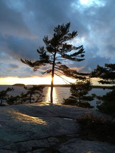 Sunset at Harold Point. LOVE this picture. It is iconic and means home to me! Life Is Beautiful, Beautiful Places, Pine Tattoo, Twilight Sky, Quelques Photos, Photography Pics, Canadian Art, Paintings I Love, Tree Art