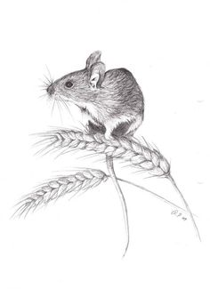 Field mouse by Viuru - 2 painting ,drawing,printing - Art Sketches Pencil Art Drawings, Art Drawings Sketches, Pencil Sketching, Bird Drawings, Animal Sketches, Animal Drawings, Maus Illustration, Mouse Sketch, Mouse Tattoos