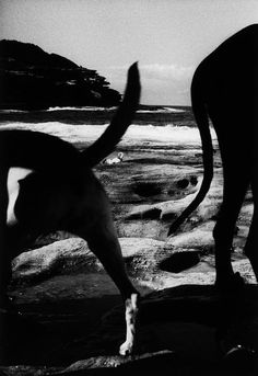 Trent Parke. Dogs playing in the surf at Tamarama beach. From Dream/Life series. Australia, Sydney. 1999. http://semioticapocalypse.tumblr.com