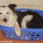 Astuce - Panier pour chien pas cher