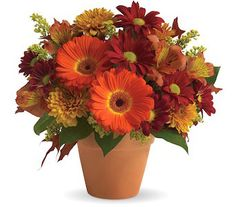 "Golden Glow Bouquet:  Send this pretty pot of golden fall flowers to someone special today!    Orange gerberas, orange alstromeria, golden cushion spray chrysanthemums, red daisies, solidago, and yellow oak leaves are beautifully arranged in a terra-cotta pot. It''s a natural way to glow!    Approximately 11 1/2"" W x 10 1/2"" H."