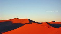APRIL 2010 / Namib Desert in NAMIBIA
