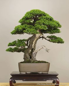 Bonsai ♣️Fosterginger.Pinterest.ComMore Pins Like This One At FOSTERGINGER @ PINTEREST No Pin Limitsでこのようなピンがいっぱいになるピンの限界