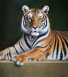 National animal of tiger hd wallpaper picture collection Tiger Drawing, Tiger Painting, Tiger Art, Big Cats, Cool Cats, Cats And Kittens, Animal Paintings, Animal Drawings, Art Tigre