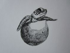 Turtle - My drypoint etching