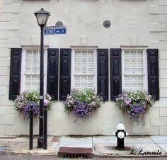 beautiful window boxes in Charleston, SC