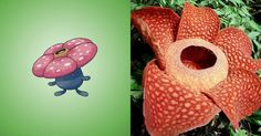 Vileplume –Rafflesia arnoldii