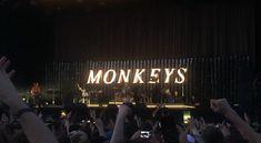 monkeys @trnsmt