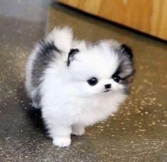cat/dog?? whatever it is it's adorbs! -juliette
