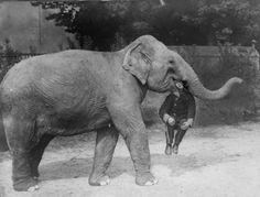 Strange Historic Photos Of Intelligent Animals