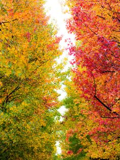 Leaves turning... Get the #leafscoops ready http://www.amazon.com/Oversize-Lifetime-Guarantee-Superior-Multipurpose/dp/B00GPVZA58