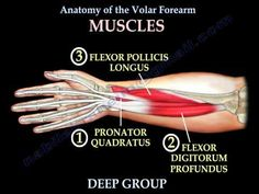 Anatomy Of The Volar Forearm Part 1 - Everything You Need To Know - Dr. Nabil Ebraheim