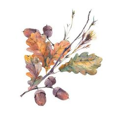 Watercolor autumn vintage bouquet of twigs, yellow oak leaves and acorns. Isolated on white background illustration Watercolor autumn vintage bouquet of twigs, yellow oak leaves. Illustration Blume, Autumn Illustration, Watercolor Illustration, Watercolor Plants, Watercolor Leaves, Watercolor Cards, Autum Flowers, Leaf Drawing, Leaf Images