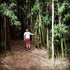 Amazing bamboo forest in Maui with Ryan great hike