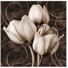 "Tulip & Swirls I 35"" Square Giclee Canvas Wall Art"