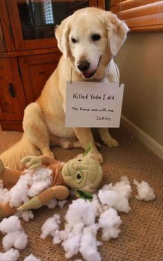 Some pets need a public shaming (31 Photos) – theCHIVE