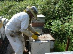 instructional calender of events for bee keeping