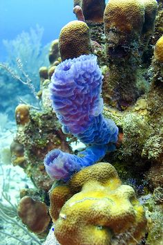 There have been medicinal properties discovered in coral reefs (Cinner 2014)